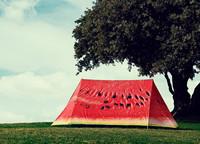 Field Candy Premium-telt